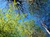 paaskeindtryk-kokkedal-skov 2