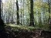 paaskeindtryk-kokkedal-skov 7