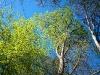 paaskeindtryk-kokkedal-skov 9