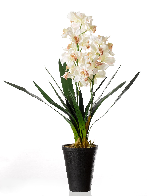 Hvordan holder man en orkide
